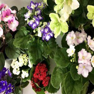 categoria-plantas-flor-300x300